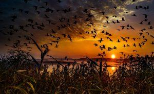 dikie-gusi-sunset