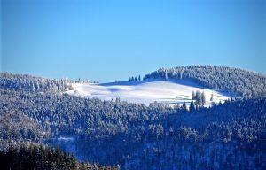 снежный-лес-black-forest