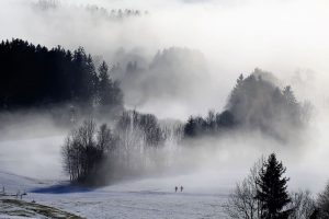 снежный-лес-fog