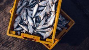 fish-lotok-rynok